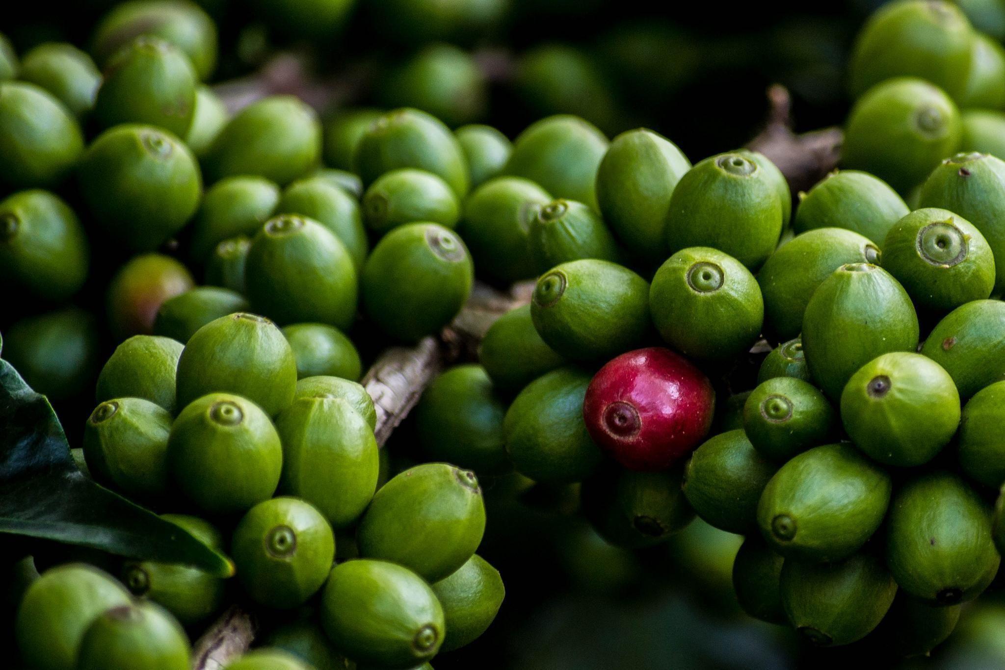 Obrazek - Pozytywny wpływ picia kawy na ludzkie zdrowie